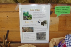 Nature Trail - Box Tree - Description