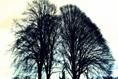 Trees - Lisa Langrish (Jan 2013)