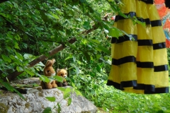 Nature Trail - Frequent Visitors - Rabbits & Foxes
