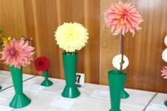 1 cactus dahlia