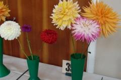 3 cactus dahlia (different cultivars)