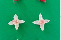 Six Fuchsia (3)