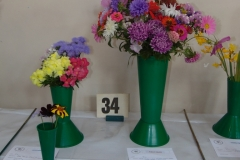 annuals from seed