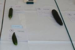 1 Cucumber