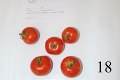 5 tomatoes calyx attached