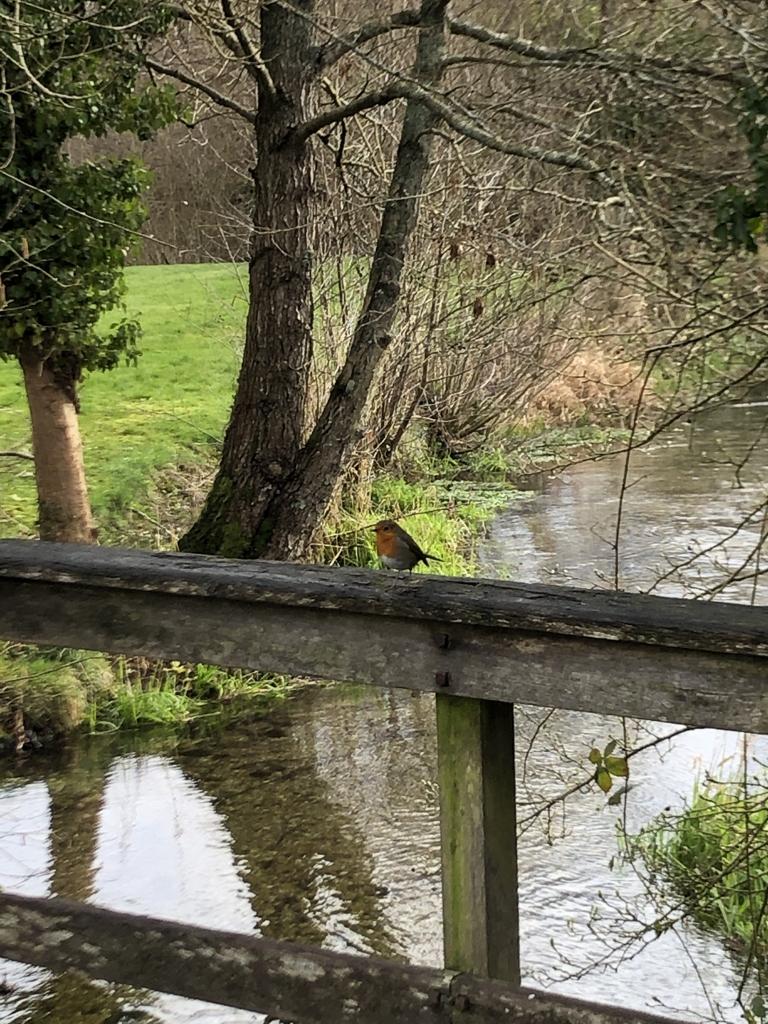 Resident Robin at Bartons Mill - Daniel Neat
